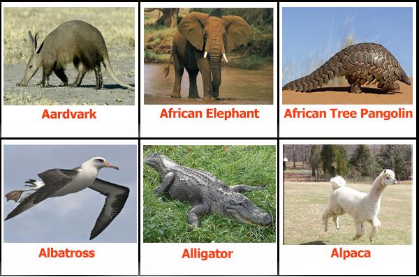 รายชื่อสัตว์ภาษาอังกฤษหมวด a1