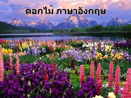 ดอกไม้ภาษาอังกฤษ