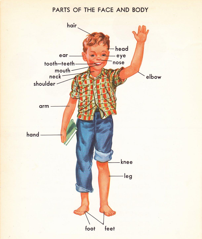 ส่วนต่าง ๆ ของร่างกาย